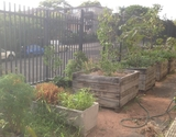 Garden boxes at Coogee