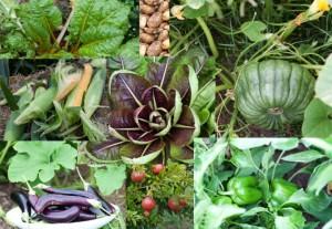 Home grown veggies